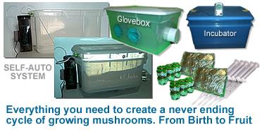 Mushroom kits - mushroom growing system - shroom kits