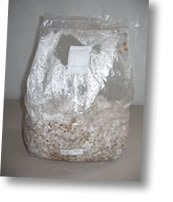 Mushroom bag - pre sterilized rye grain bags for spawning